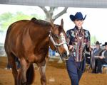florida goald coast quarter horse..jpg